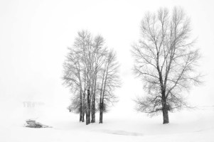 photograph-of-trees-yellowstone-wyoming-winter