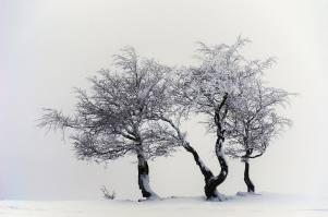 photography-nature-snow-trees-wallpaper-preview