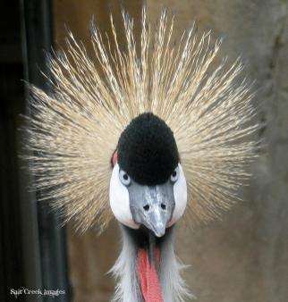 1-crazy-hair-cj-vermote