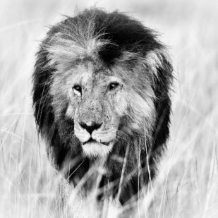 25_wildlife_photograph_in_black_and_white_high_key-3989-900-600-100
