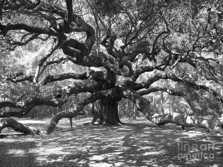 angel-oak-tree-black-and-white-melanie-snipes