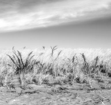 Cape Grass-Edit