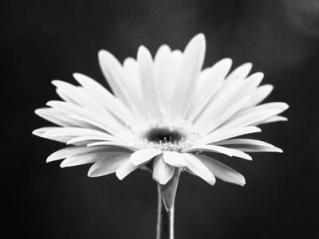 carolyn-cochrane-daisy_u-l-q1b9h7z0