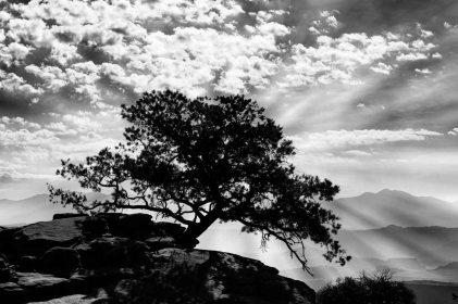 cette-photographie-artistique-en-noir-et-blanc-n-est-pas-a-propos-de-l-arbre-amar-guillen-photographer