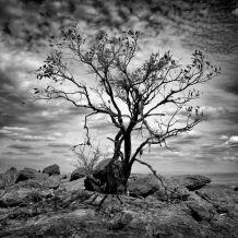 fine-art-photograph-of-a-tree-in-kenya-amar-guillen-photographer