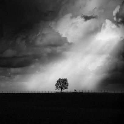 George-Digalakis-Tree-of-life-870