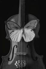 graphic-butterfly-on-violin-garry-gay