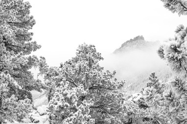 a wintry outdoor mountain scene near Boulder Colorado of snow flocked trees with a mountain in the background with a low cloud hanging over the base.