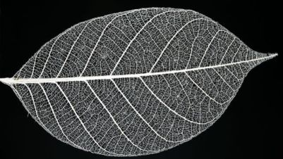 leaf-skeleton.jpg.653x0_q80_crop-smart