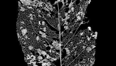 leaf_detail_1024x1024