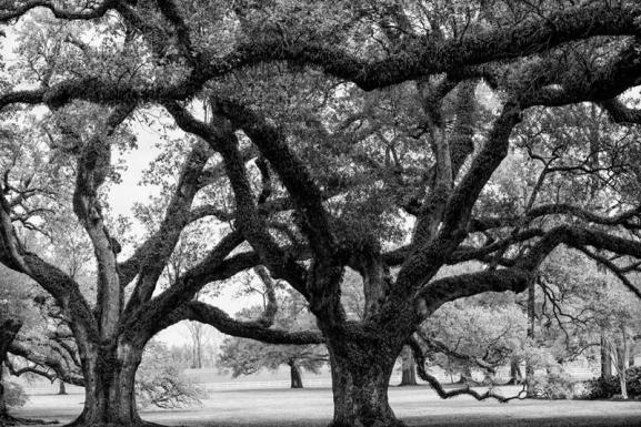 Oak-Alley-Plantation_-Louisiana_-2013_-_RQ0A4841_1024x1024