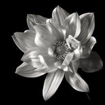 2010_EPT_bwflower04
