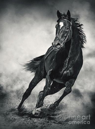 black-horse-running-wild-black-and-white-dimitar-hristov
