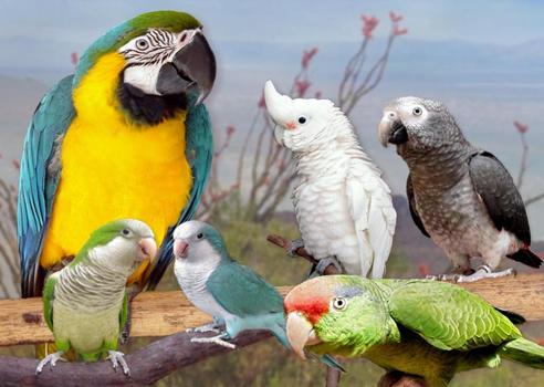 К чему снится говорящий попугай в клетке. Приснился попугай во сне