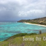 Sunscreens a Threat to Coral Reefs
