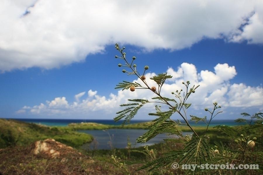 Altona Lagoon St Croix