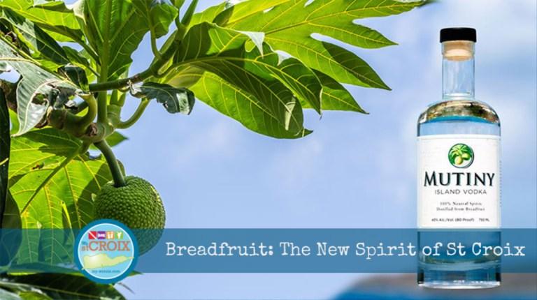 Breadfruit the New Spirit of St Croix