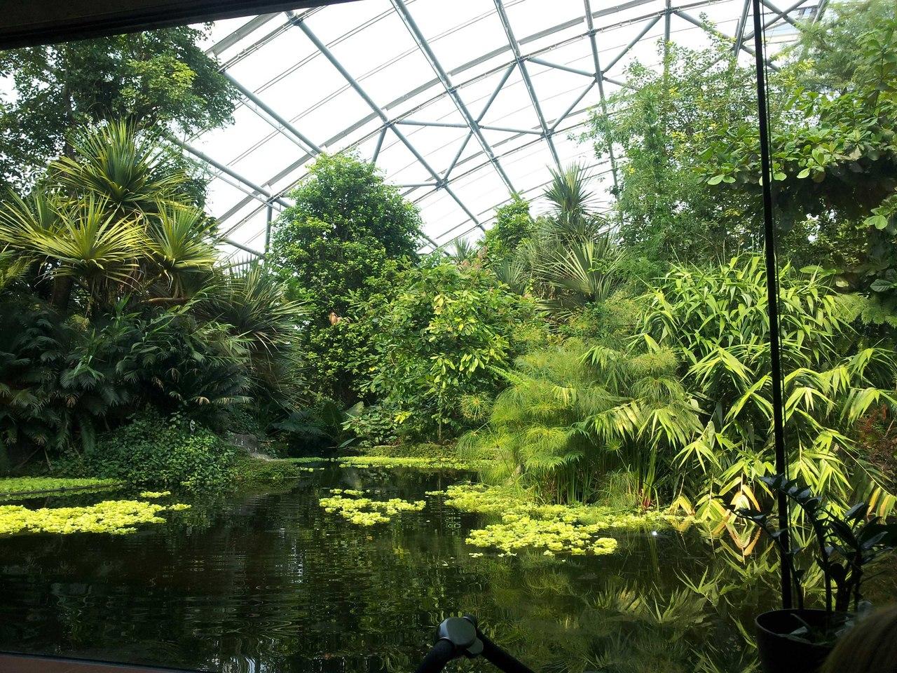 Цюрихский зоопарк. В павильоне Мазоал