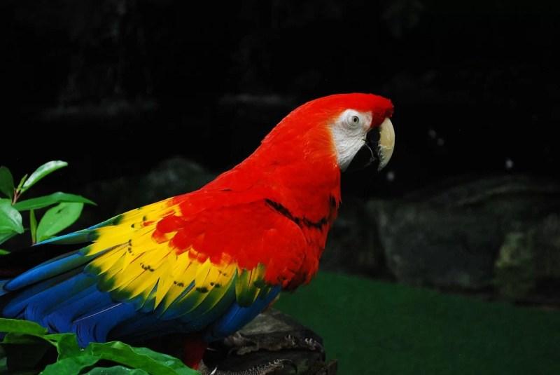 ジュロンバードパーク Jurong Bird Park