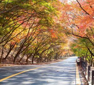 内藏山赏枫