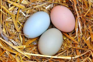 PHOTO: eggs