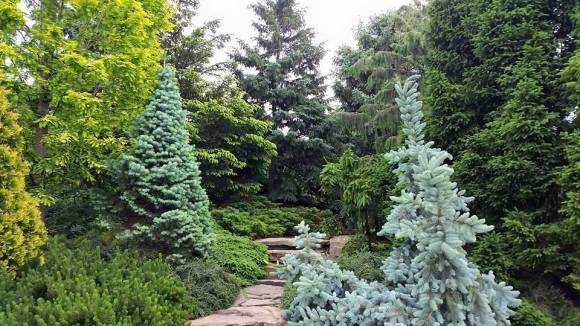 PHOTO: Dwarf Conifer Garden in spring.