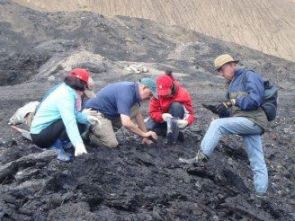 PHOTO: Five researchers dig through a mound of lignite, collecting fossil samples.