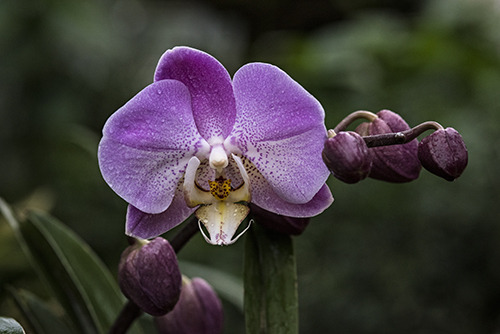 PHOTO: Orchid.