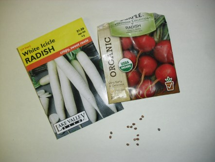 PHOTO: Seed packets for White icicle radish and an organic red radish are shown, next to about a dozen scattered radish seeds from the open package.