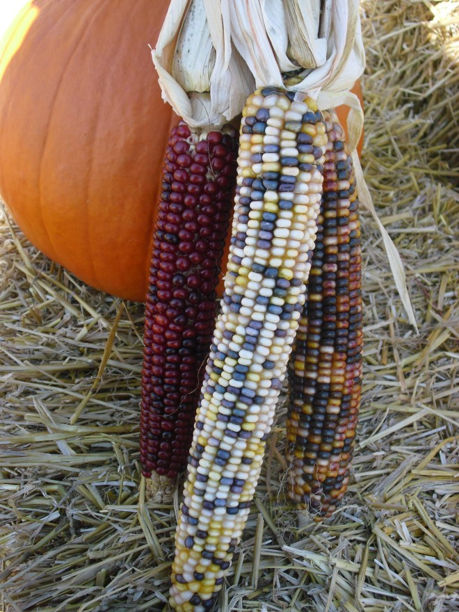 PHOTO: Indian corn and pumpkin.