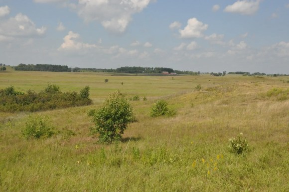PHOTO: A view of Nachusa Grasslands taken from Dr. Vitt's field site.