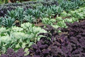 PHOTO: The bountiful Regenstein Fruit & Vegetable Garden in 2014.
