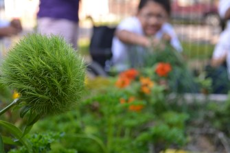 PHOTO: Students at Christopher School work to transition their school garden from summer to fall.