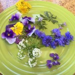 PHOTO: Edible flowers.