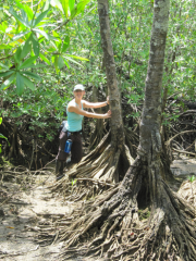 Here I am with a couple of mangrove specimens. These roots are in water at high tide, but exposed at low tide.