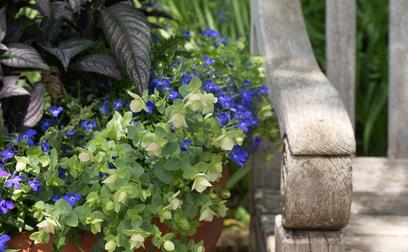 Planting Spring Containers With a Designer's Eye