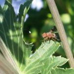 Fly - Bee fly 2