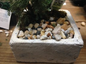 PHOTO: Glued-down rocks on a gift juniper bonsai.
