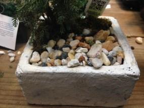 PHOTO: Glued-down rocks on a gift juniper bonsai.