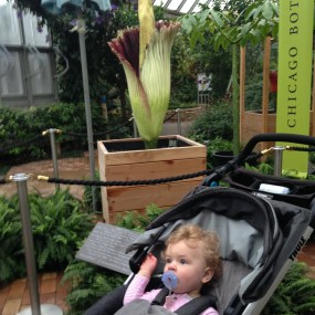 Baby visiting corpse flower bloom at the Chicago Botanic Garden.