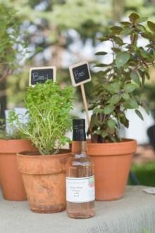 PHOTO: Unusual herb cultivars in display pots.