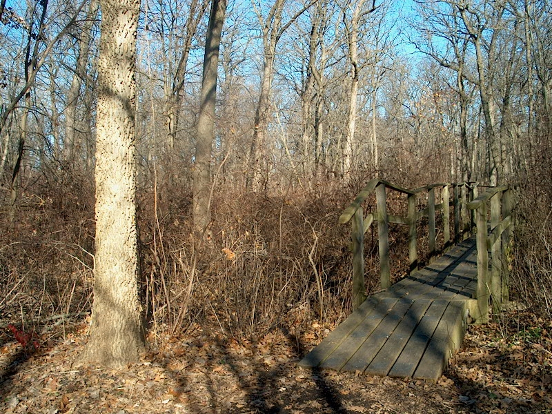 PHOTO: A tall hackberry stands at the south entrance of a wooden bridge that crosses a seasonal stream in McDonald Woods. All the trees in the wood are leafless.