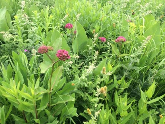 A healthy, diverse prairie