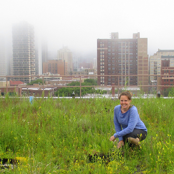 Kelly Ksiazek-Mikenas studies how green roofs can provide habitat for native plant species.