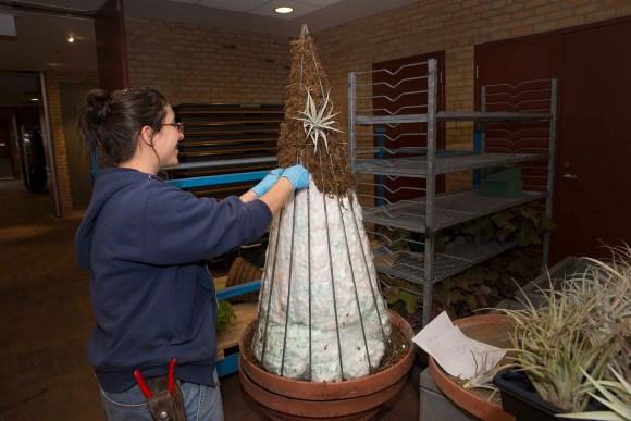 Liz Rex stuffing the topiary tree frame