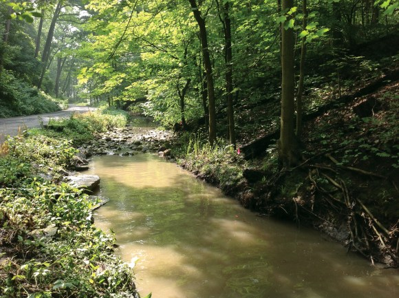 PHOTO: A bike path along the bottom of Millard Park ravine, next to a small stream.