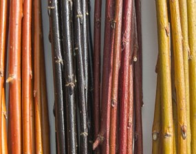PHOTO: A group of willow twigs shows a variety of color for the winter landscape.