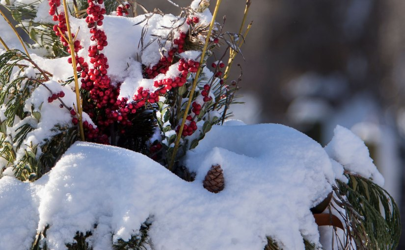 New Year's gardening resolutions from our horticulturists