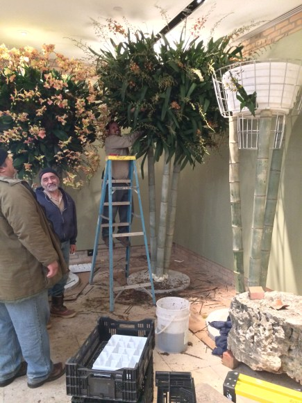 PHOTO: Staff plant up the bamboo trees and wire baskets to create orchid trees.