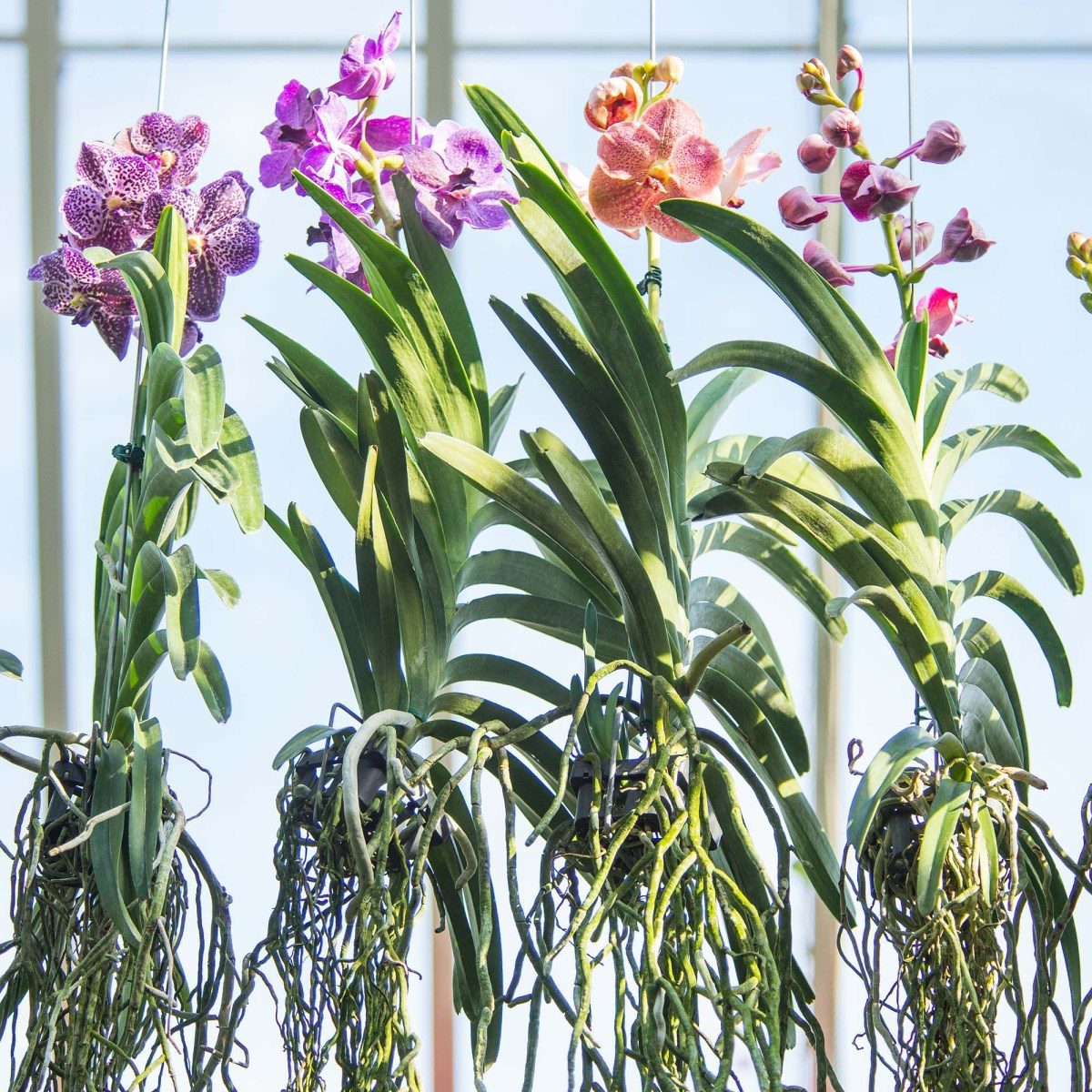 Test your Orchid IQ—how do orchid roots work?